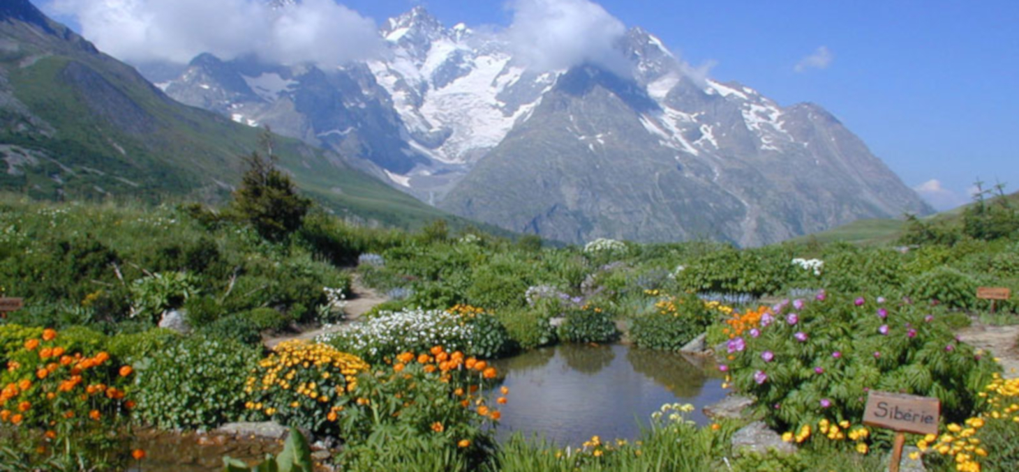 Jardin botanique alpin du Lautaret © Jardin du Lautaret