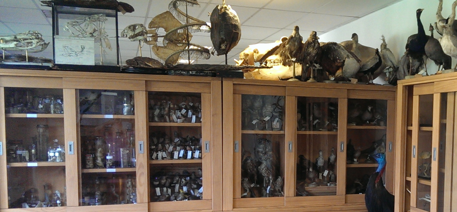 La collection de zoologie - UFR de biologie UGA